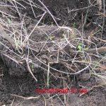 Підкопуємо корінь