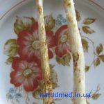 Вимитий корінь цикорію